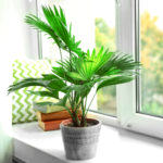 How Can I Keep My Plants Alive While I'm Away?